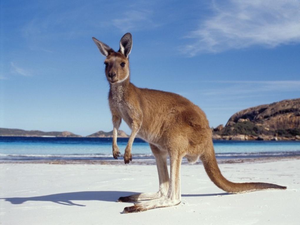 AUSTRALIA - NOUA ZEELANDA - OCEANIA
